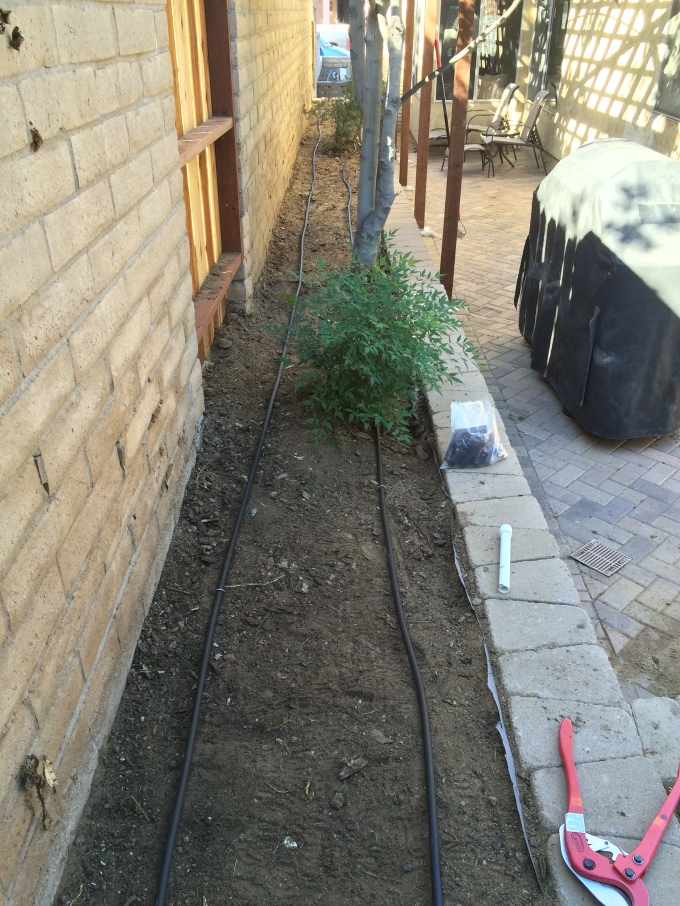 The side yard with dripline installed.