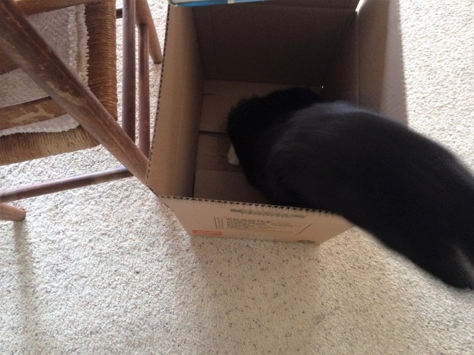 One of our cats helping with the move out. For some reason, all cats are attracted to boxes. They were really having a field day during the move!